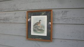 duck picture 19 x 17 inches in Tomball, Texas